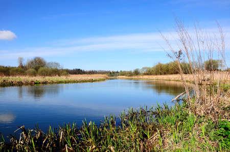 marshy: narrow river with marshy coast and the spring blue sky Stock Photo