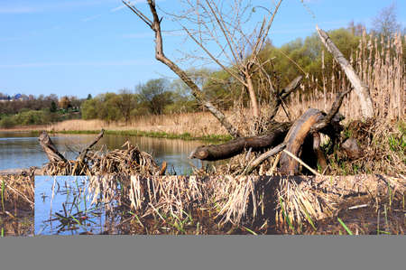 marshy: marshy coast of the narrow river with the spring blue sky
