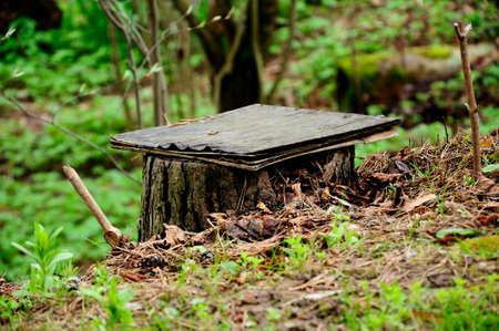 selfmade: interesting small self-made bench from a forest stub Stock Photo
