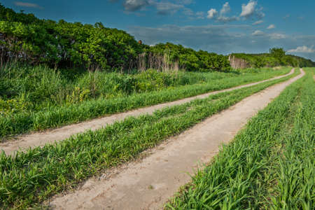 suelo arenoso: summer rural landscape. the field sandy road along bushes to the wood under the blue cloudy sky Foto de archivo