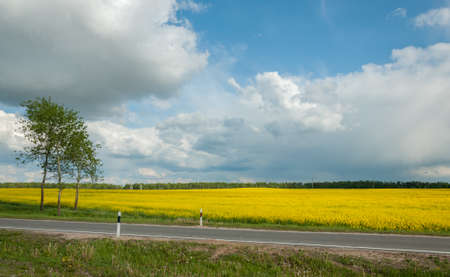 photo edges: agricultural field of the blossoming raps behind the road under the cloudy sky