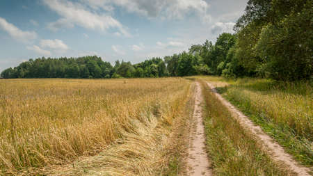 non stock: rural road on the edge of the agricultural wheat field under the cloudy sky. middle of summer