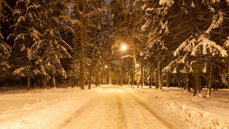 snowcovered: road through the evening winter snow-covered city park is lit with streetlights