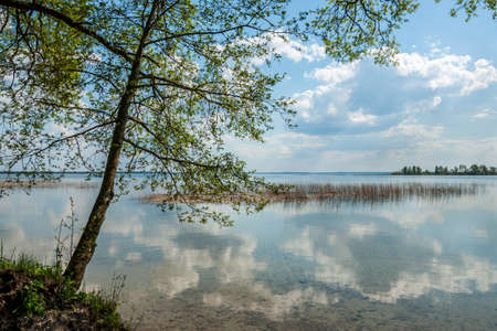non stock: view from the coast on the big beautiful spring lake. tree. reflection of the cloudy sky in water in shallow water Stock Photo