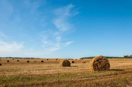 non stock: bales of dry golden straw in a row on the agricultural field under a clear blue sky in August
