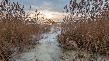 Coastal reeds on a frozen lake amidst a beautiful dramatic sunset. Early spring thaw Stock Photo