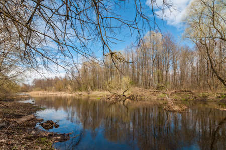 thickets: beautiful spring landscape. the coast of the forest river with trees and bushes under the blue sky