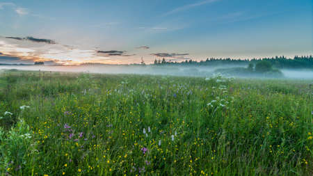 mystical evening foggy landscape. the fog which is low creeping on a meadow. sunset. summer