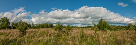 non stock: Beautiful panoramic view of the densely overgrown grass of a rural meadow under a blue cloudy sky
