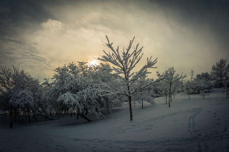 Abstract winter landscape. trees under the snow on a hillside in the evening in cloudy weather against the background of a dramatic sky