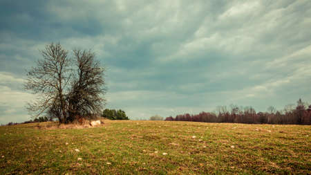 dramatic spring landscape. lonely bare tree farm field on a cloudy sky background Stok Fotoğraf