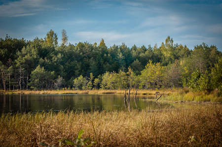 beautiful summer-autumn landscape. coast of a small lake with a creeper, bushes and coniferous forest under a blue sky Stock Photo