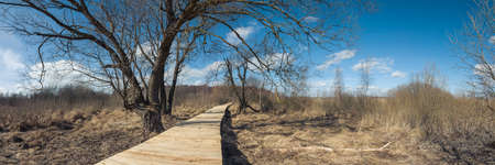 panoramic spring landscape. wooden road through picturesque marshland with dry grass between bare trees under a blue March sky