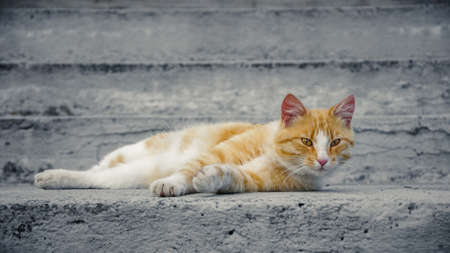 homeless ginger cat with attentive gaze lying on the concrete stairs