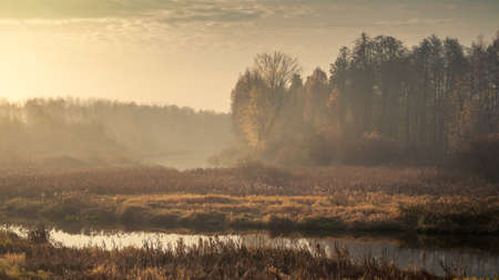 Autumn morning foggy landscape. sad view of an overgrown narrow river in marshland with a coastal densely overgrown dry reed and light forest in the light of sunrise through a haze in overcast weather