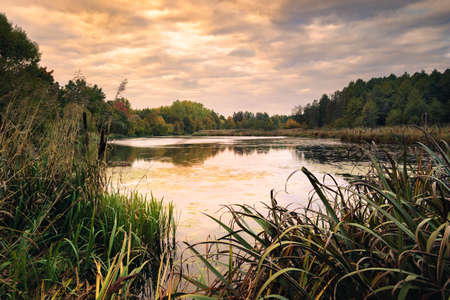 Tranquil evening lilac landscape. view from the shore through a thick reed to a swampy lake with stagnant water and the opposite wooded coast under a cloudy sky Stock Photo