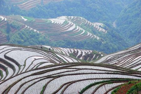 pastoral scenery: Guilin longji terraces