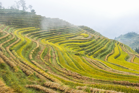 The terraced fields scenery in autumn Stock Photo