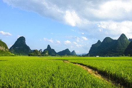 The countryside and mountainns scenery in summer