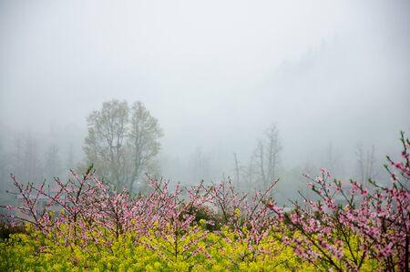 Florecimiento melocotón paisaje árboles de flores en la niebla Foto de archivo