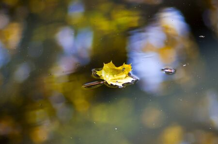 Leaves floating on a still pond in autumn Standard-Bild