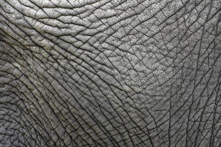 De huidtextuur van een oude olifant