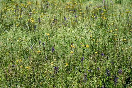 A field of wild flowers and long grass in summer