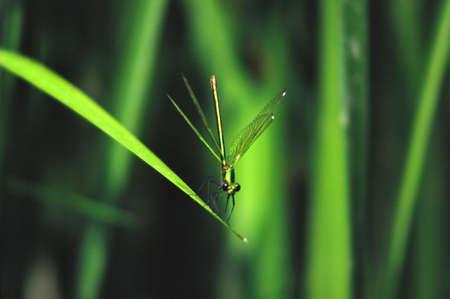 Dragon-fly on leaf photo