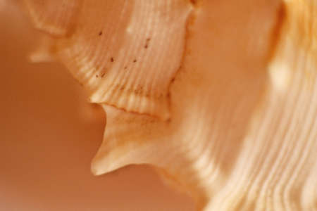 touched: shell