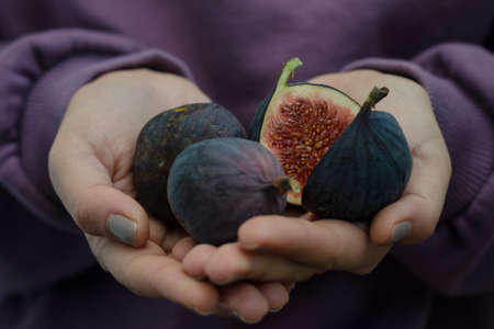 Hands of a women holding ripe figs on a purple background