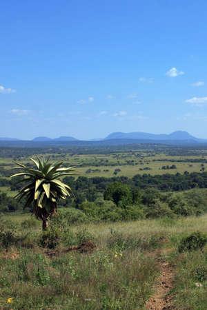 giardino esterno, Ramotswa pascolo lqnds, Botswana Archivio Fotografico