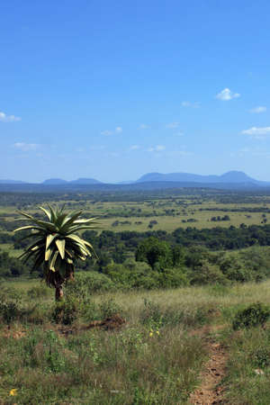outdoor garden, Ramotswa grazing lqnds, Botswana Stock Photo