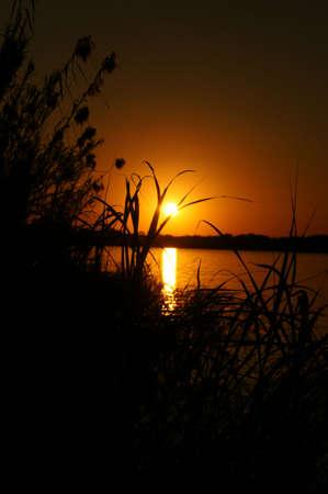 Dietro i cespugli, fiume Chobe Archivio Fotografico