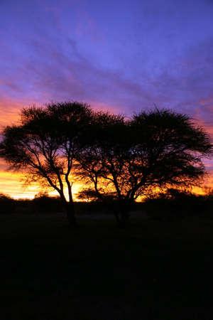 Velvet tramonto