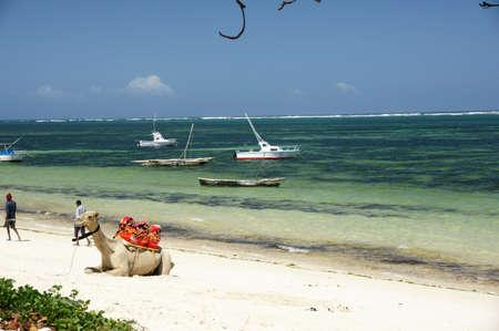 Tropical beach-front