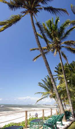 Palm peaceful