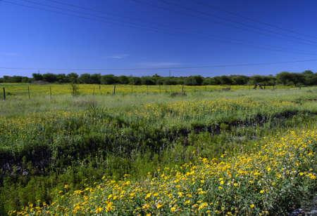 Plain fields