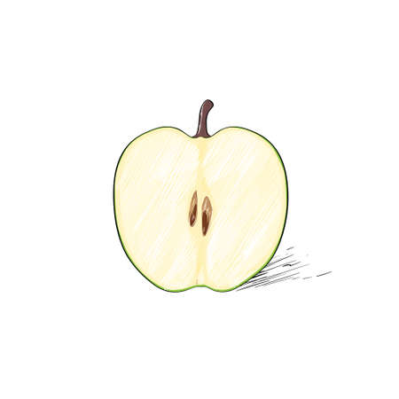 half apple: green cut half apple sketch draw isolated over white
