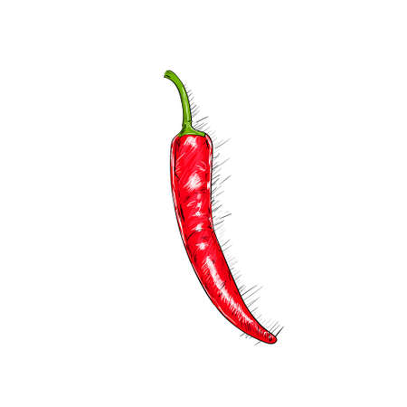 chilly: red chili pepper sketch draw isolated over
