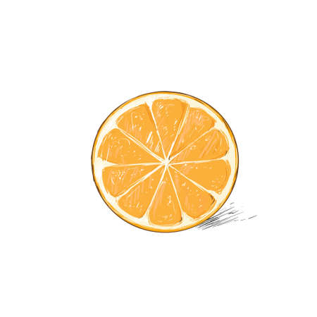 orange cut: orange half cut circle citrus fruit color sketch draw isolated over white background