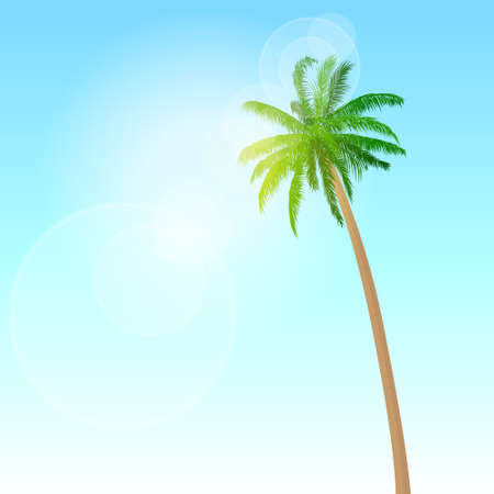 beach sea: green palm tree over blue sky vector