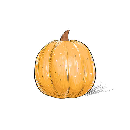 isolated over white: pumpkin sketch draw isolated over white background