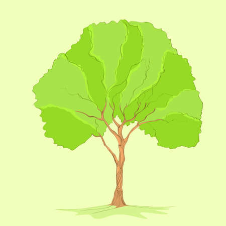 isolated tree: green tree with leaves and brown bark vector
