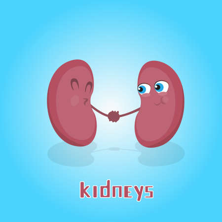 hold hands: Kidneys Hold Hands Smiling Cartoon Character Icon Banner Flat Vector Illustration