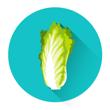 kale: Green Salad Vegetable Icon Flat Vector Illustration