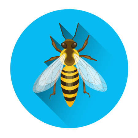 apiary: Bee Honey Insect Apiary Icon Vector Illustration