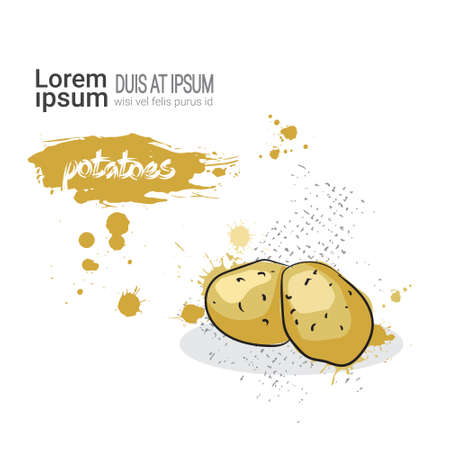 Potato Hand Drawn Watercolor Vegetable On White Background With Copy Space Vector Illustration