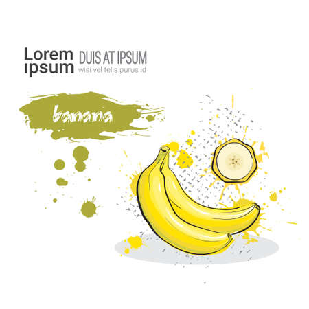 banana: Banana Hand Drawn Watercolor Fruit On White Background With Copy Space Vector Illustration