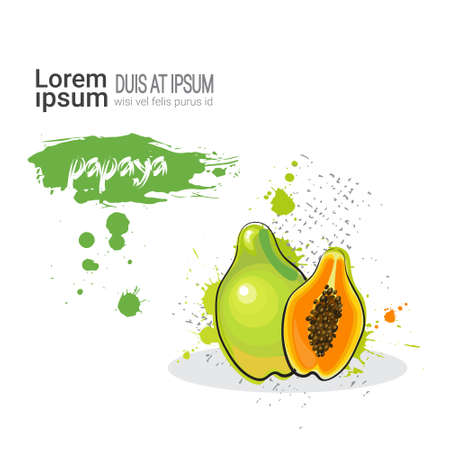 Papaya Hand Drawn Watercolor Fruit On White Background With Copy Space Vector Illustration