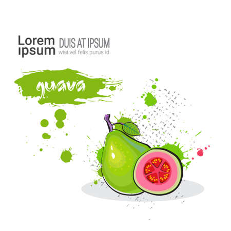 Guava Hand Drawn Watercolor Fruit On White Background With Copy Space Vector Illustration